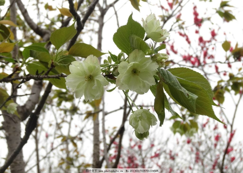 春天的花图片
