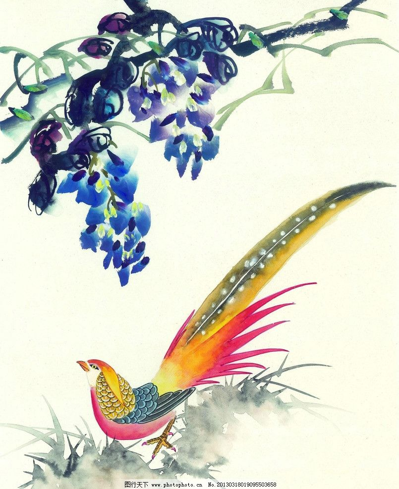 水彩国画 水墨画 国画 水彩画 花 孔雀 山鸡 凤凰 绘画书法 文化艺术