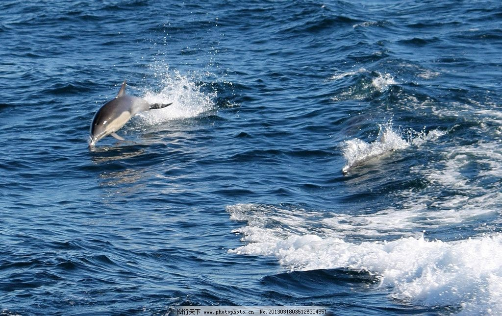 海豚 海洋 蔚蓝 海水 海面 鱼跃 跃起 大海 摄影 生物 浪花