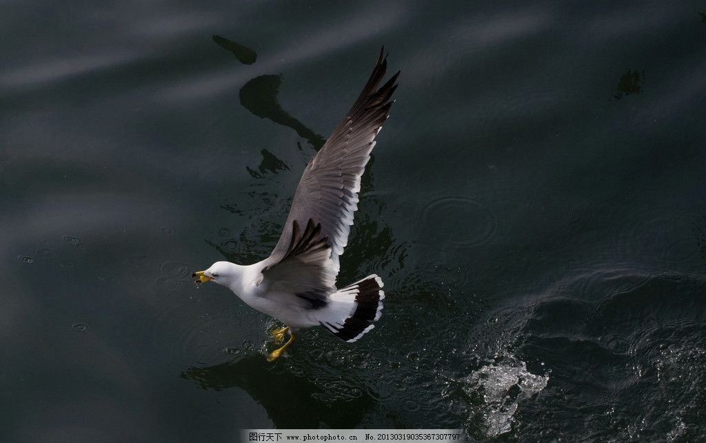 壁纸 动物 鸟 鸟类 1024_643