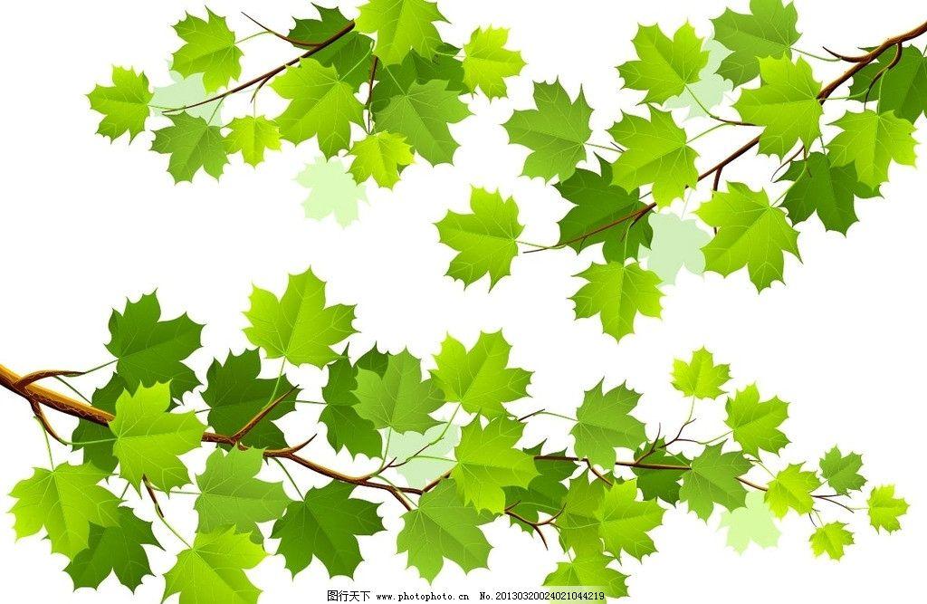枫叶 植物 树叶 树枝 绿色 平面设计 自然风景 矢量图片