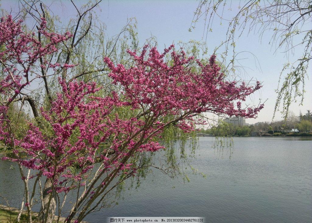 绿树红花湖面图片