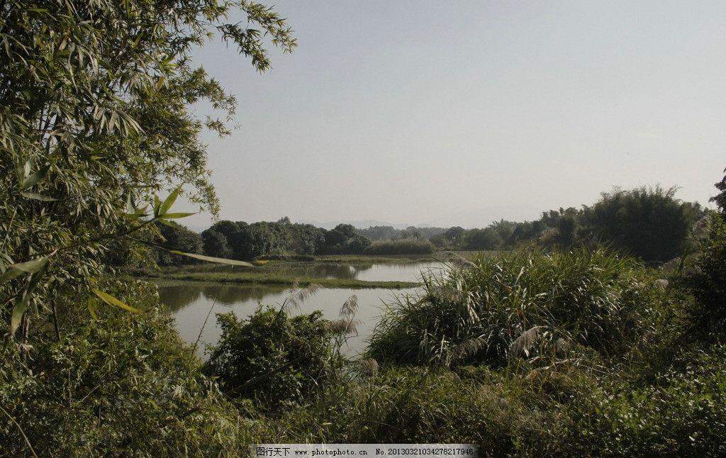 野外 竹子 荒草 水塘 风景 旅游风光风景 人文景观 摄影