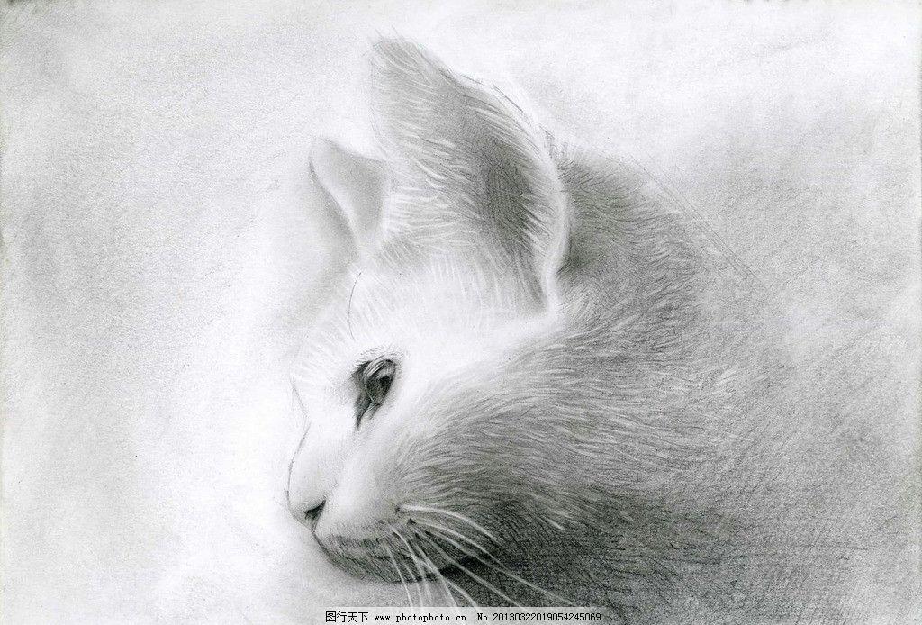 素描 猫 白猫 猫的侧脸 手绘 铅笔画 绘画书法 文化艺术