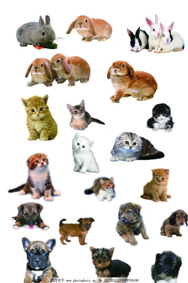 可爱小猫小狗小免 可爱小猫 小狗 小免 各种动物 psd分层素材 源文件