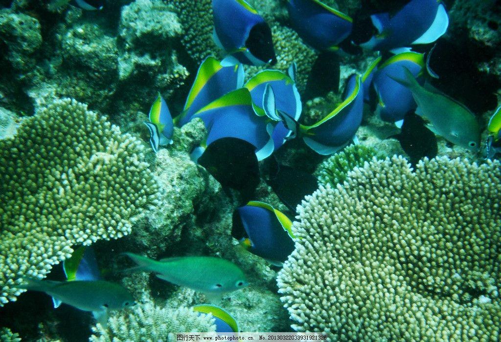 水泡 金鱼 鱼 动物 生物 动物世界 野生动物 其他生物 生物世界 海底
