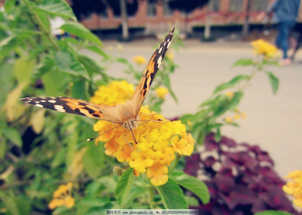 蝴蝶戏黄花 蝴蝶 黄花 lomo 动物 植物 昆虫 生物世界 摄影 180dpi jp