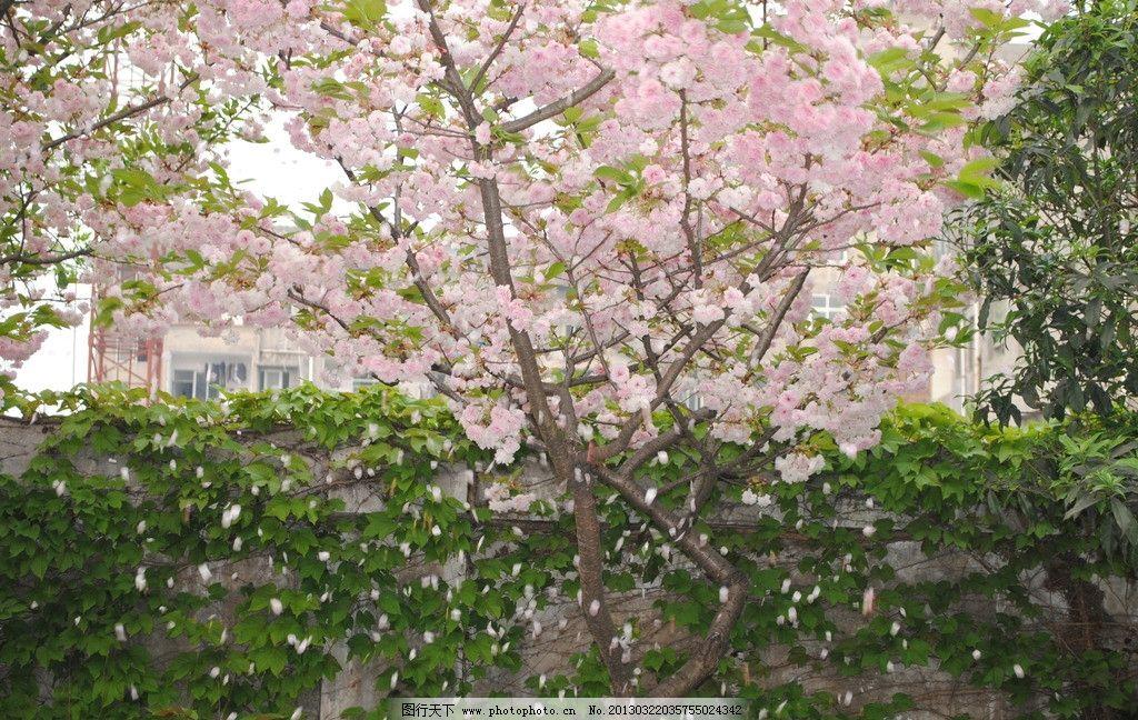 一树繁花图片
