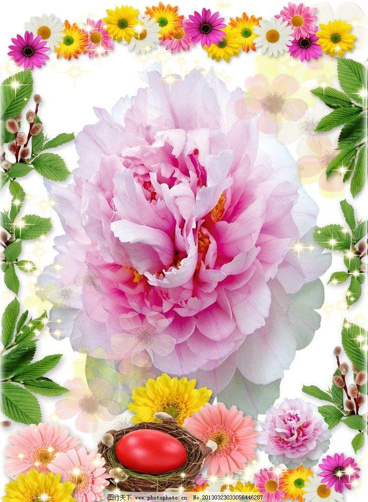 美丽的花图片