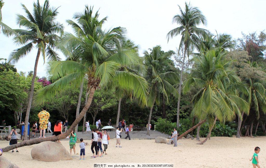 歪脖子椰子树 高清 海南 三亚 天涯海角景区 椰子林 椰子歪脖子