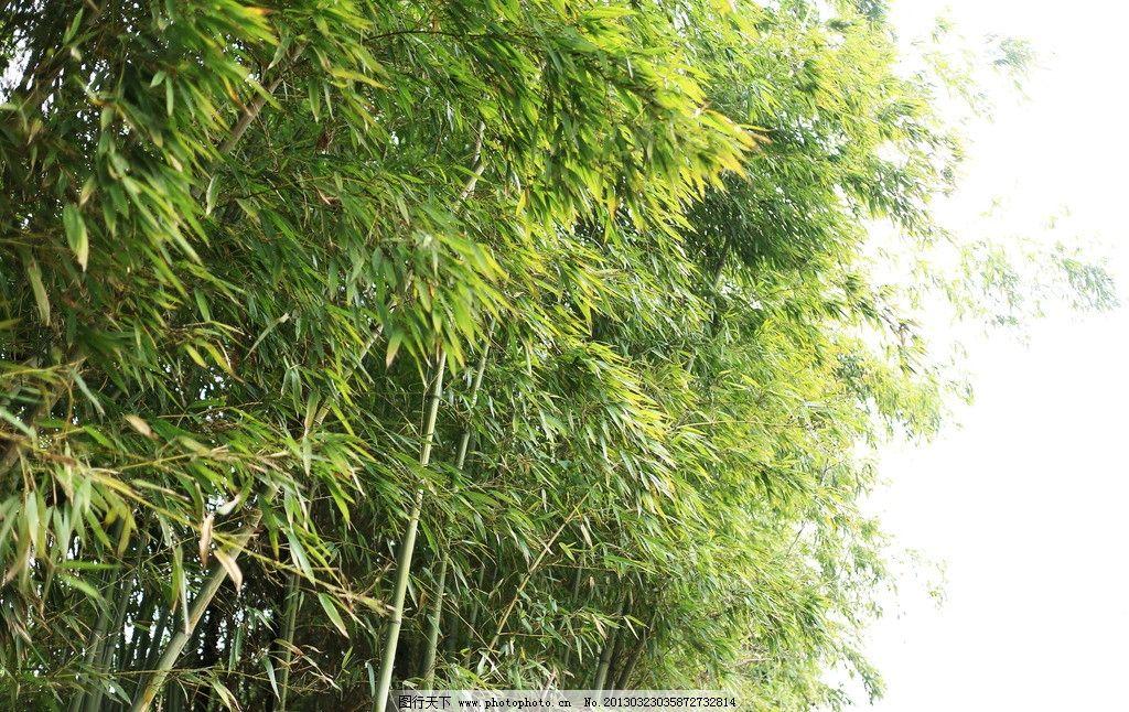 壁纸 风景 植物 桌面 1024_646