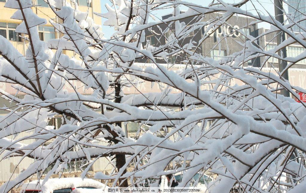 暖冬 雪景 树枝 冬天 白色 交错 凌乱 雪压枝头 树挂 树木树叶 生物