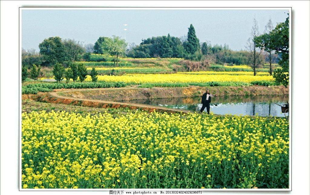希望的田野 江南 浙江 兰溪 风景 乡村 油菜花 春天 黄色 山水风景