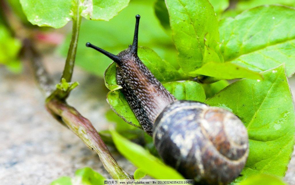 蜗牛 动物图片 昆虫摄影