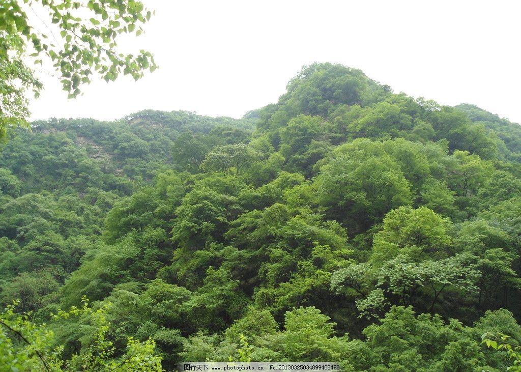 森林 蓝天 白云 大山 道路 自然风景 自然景观 摄影 72dpi jpg