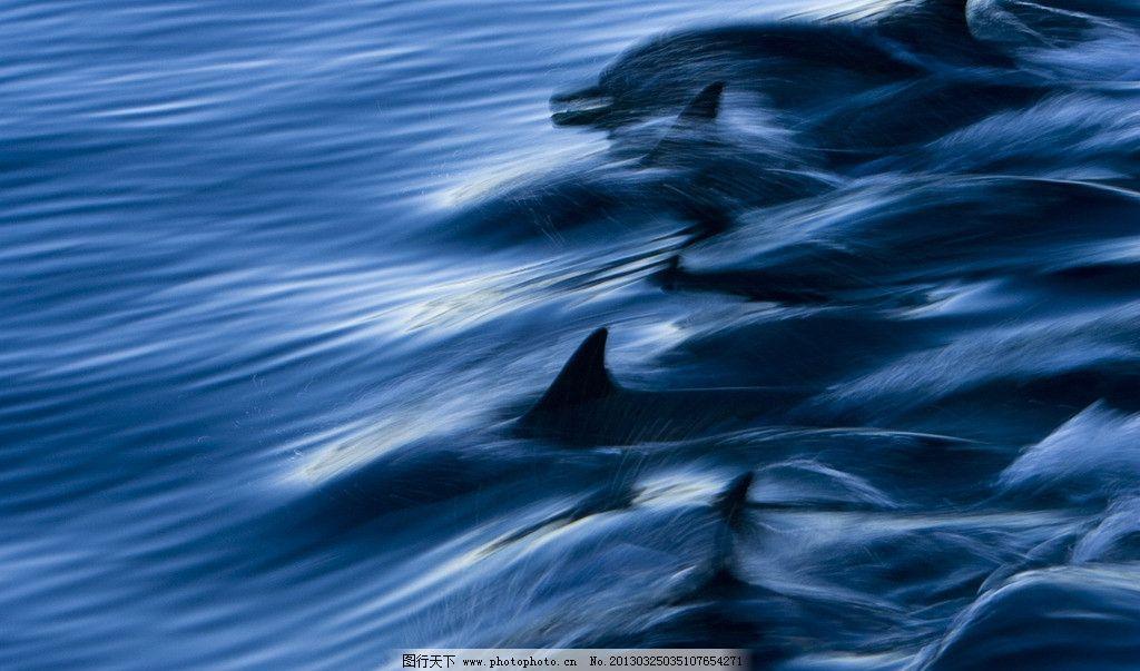 海豚和浪花 矢量图