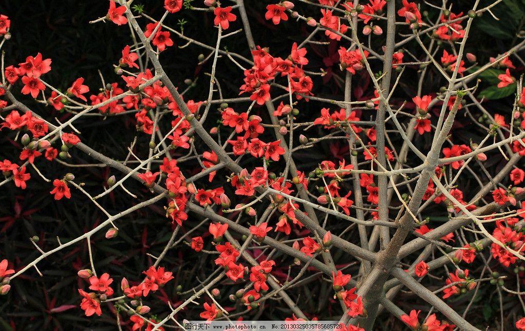 木棉花 木棉树 树枝 红色