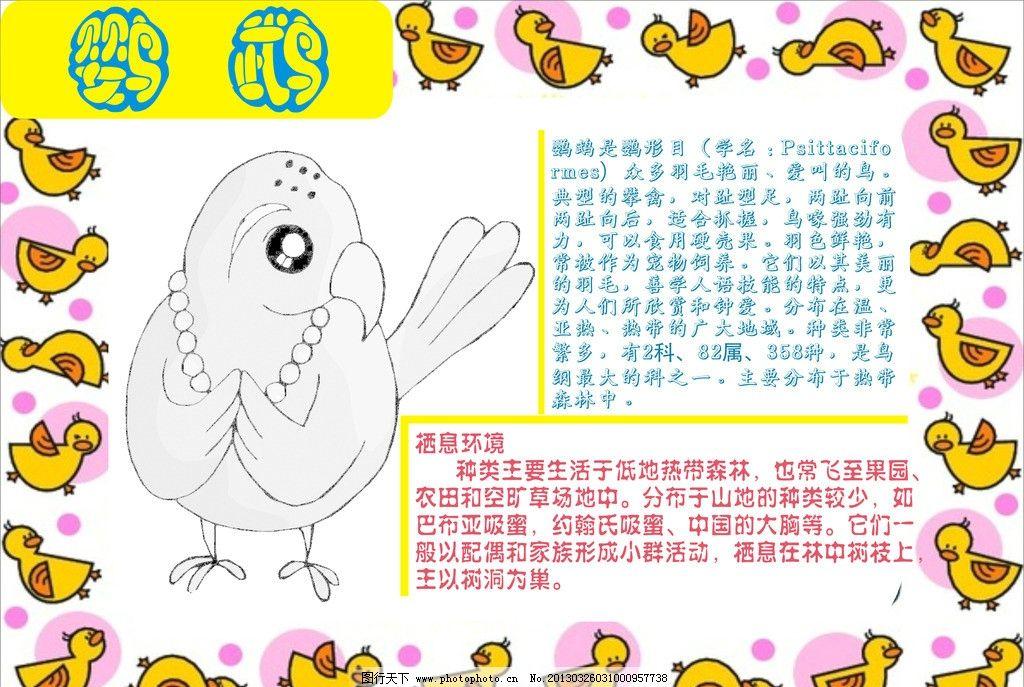 鹦鹉小报 鹦鹉 动物 动物小报 卡片 小报 其他设计 广告设计 矢量 cdr
