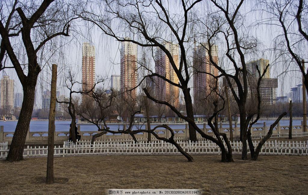 公园风光摄影 公园风景 湖水 枯树 高楼 道路 小道 枯草坪 树木 树枝
