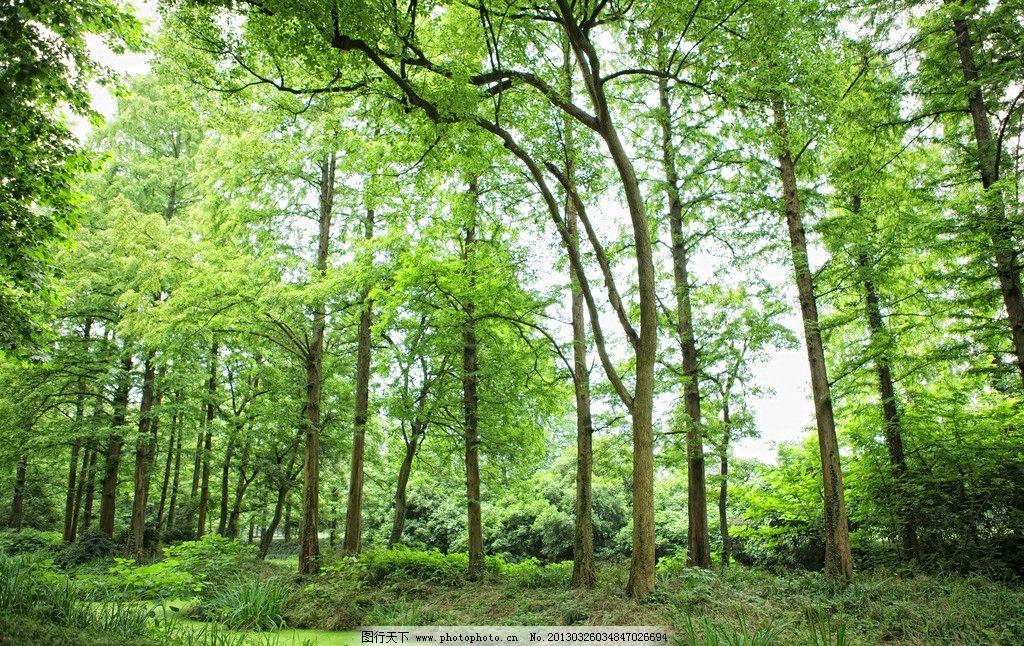 绿色树林 树木 绿叶 草地 夏天 自然 自然风景 自然景观 摄影