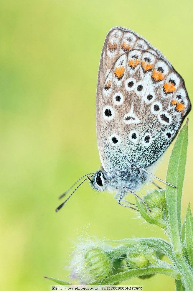 蝶恋花 昆虫 动物 翅膀 生物世界 动物世界 飞行 风景 绿色 唯美 摄影