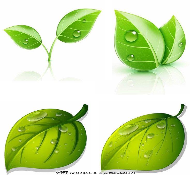 禾苗绿叶 水珠水滴 禾苗 绿叶 水珠 水滴 树叶 绿色 环保 手绘 矢量
