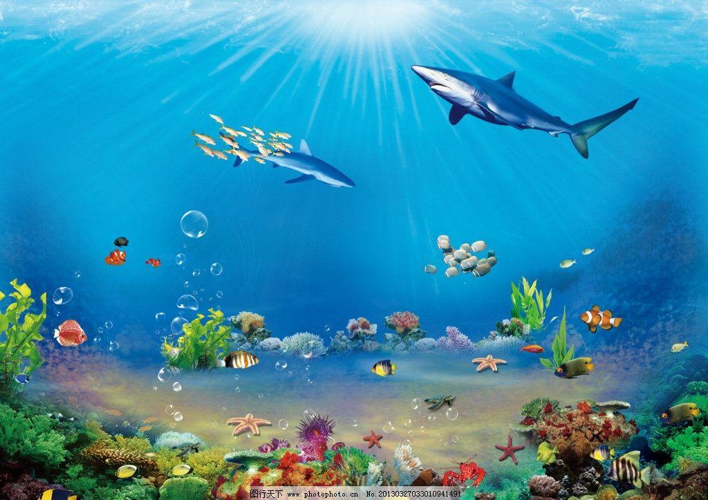 奇妙的海底世界 海洋世界 海底世界 海底 海 鱼 海洋 贝壳 水下动物