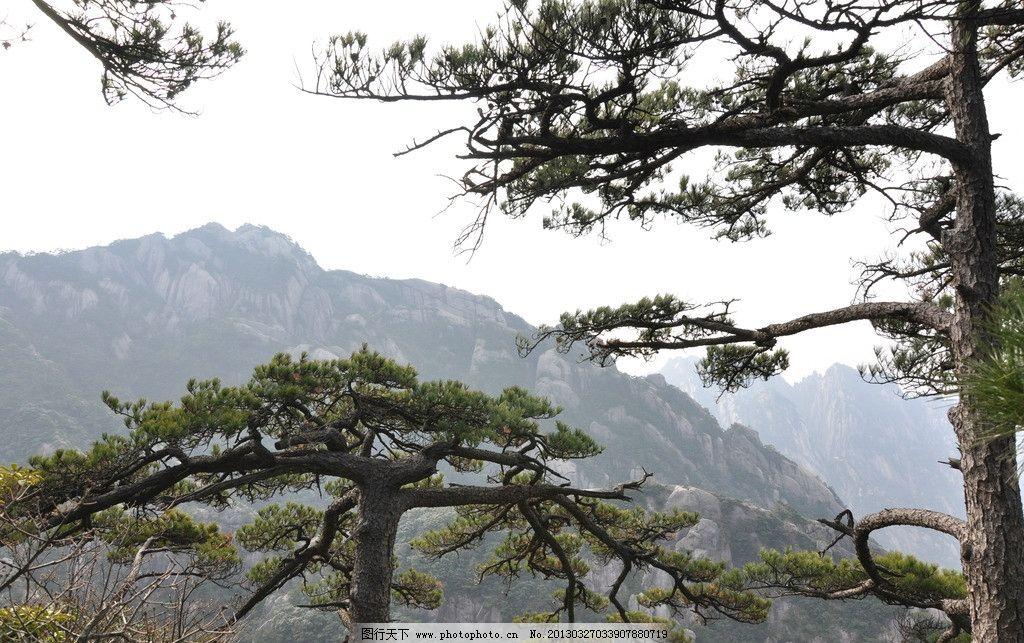 松树 黄山 安徽黄山 风景 安徽旅游 风景名胜 自然景观 国内旅游 旅游