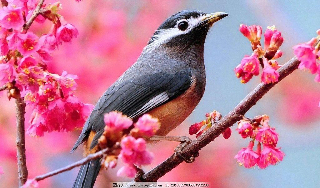鸟语花香 植物 天空 小鸟 树林 鲜花 大树 森林 自然景观 摄影