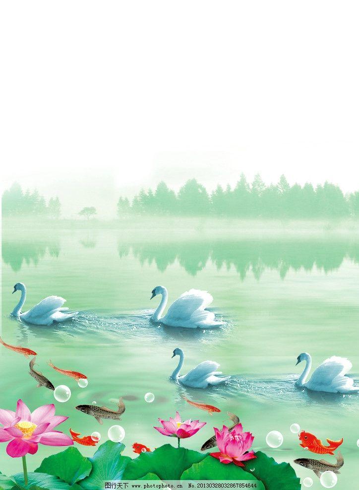 天鹅与鲤鱼 荷花 荷叶 鲤鱼 红鲤鱼 黑鲤鱼 大荷叶 白天鹅 湖 碧波图片
