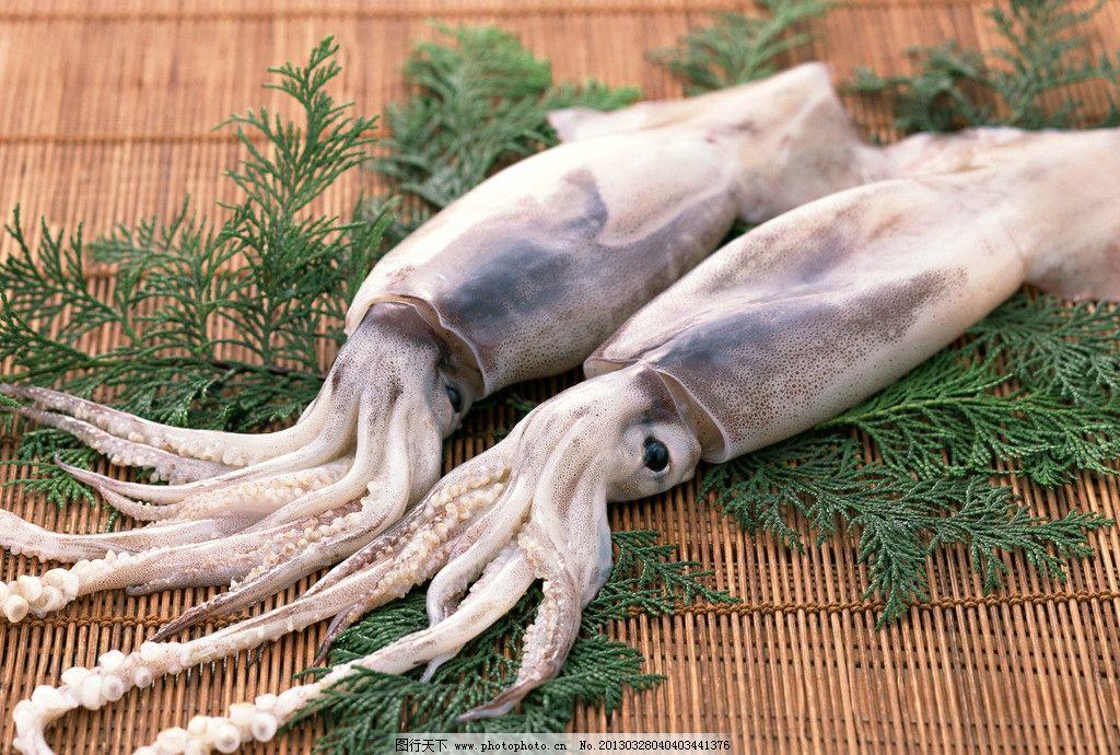 阿根廷 鱿鱼 软体动物 乌贼种类 海洋生物 海鲜类 做法多种 味道鲜美