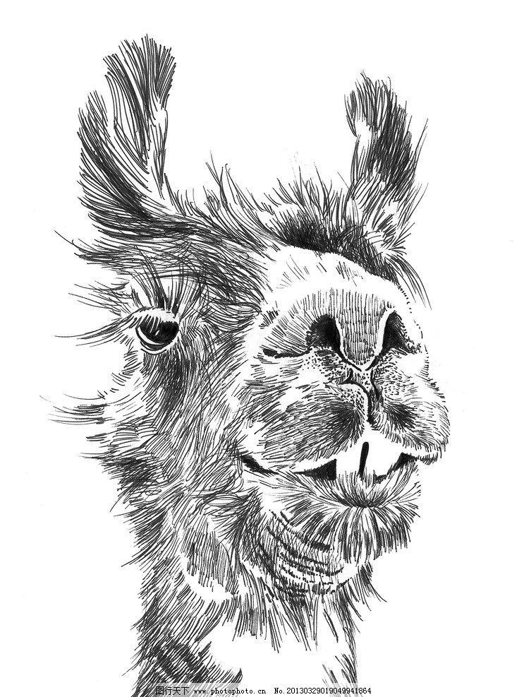 骆马钢笔 素描漫画 素描 漫画 装饰画 绘画 文化艺术 绘画书法 设计图片
