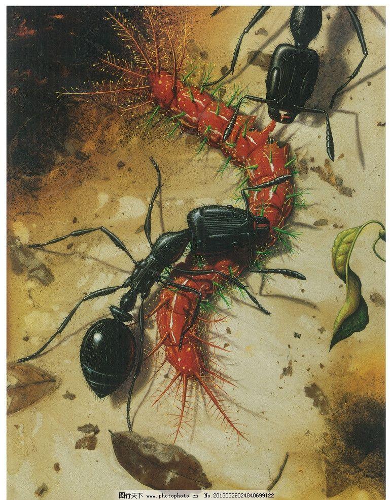 高清手绘蚂蚁图片