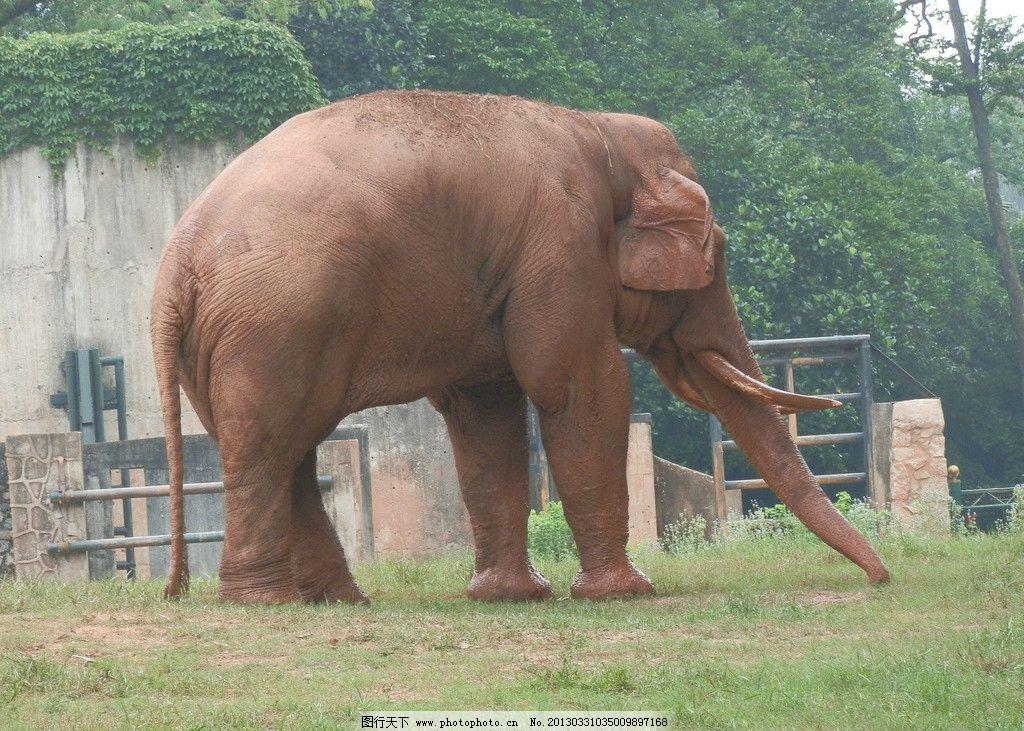 大象 动物 动物园 公园 象 野生动物 生物世界 摄影 300dpi tif
