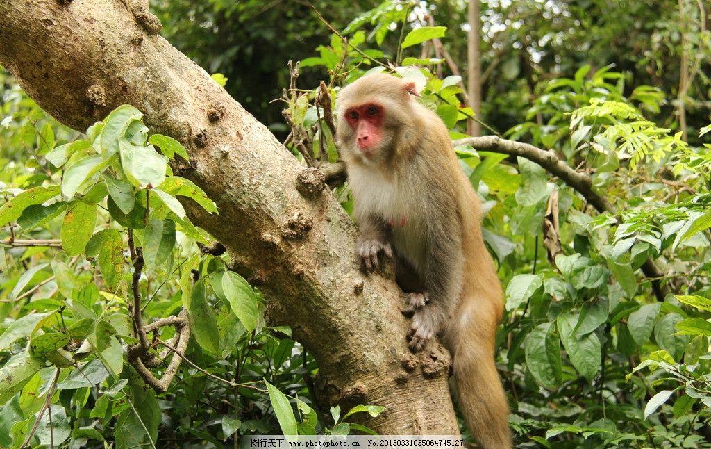 猴子 小猴子 母猴 调皮 调皮的猴子 野生动物 生物世界 摄影 72dpi