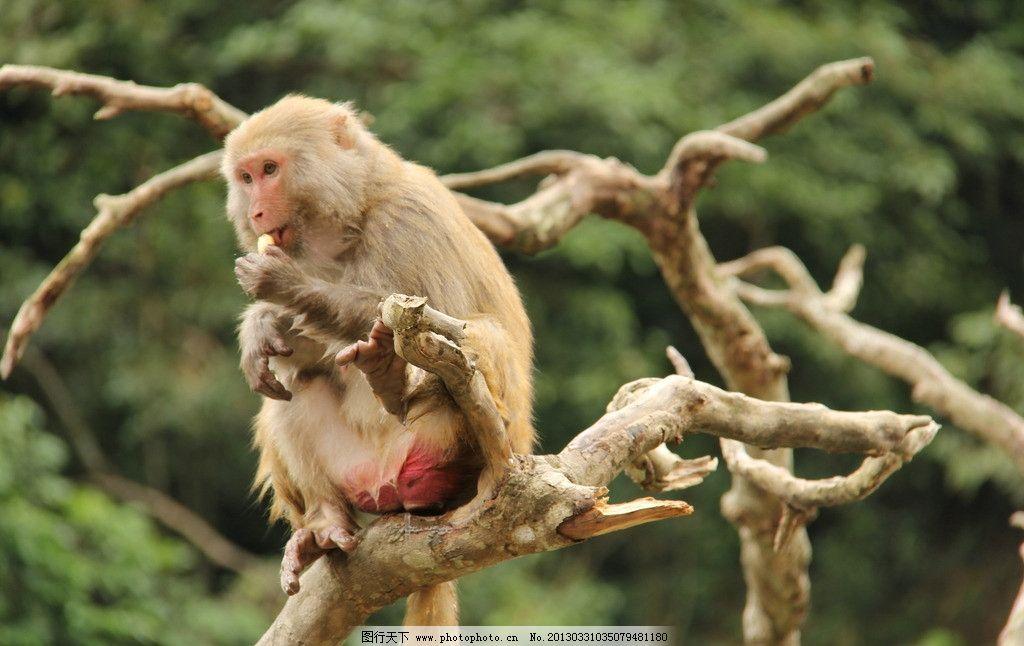 猴子 小猴子 母猴 母子 母猴抱小猴 调皮 调皮的猴子 野生动物 生物